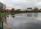 Zarybiono staw przy ul. Dobrskiej_3