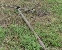 Kto połamał drzewka na Muchlińskiej?_2