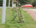 Kto połamał drzewka na Muchlińskiej?_5