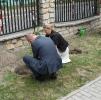 Dąb Niepodległości posadzony_9